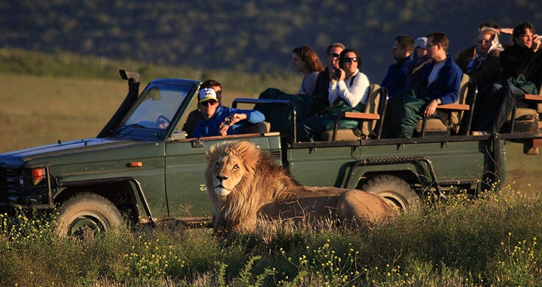Cape Town & Garden Route Safari Tour Top Banner