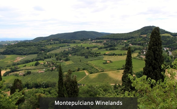 Montepulciano Winelands