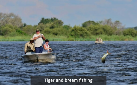 Tiger and bream fishing