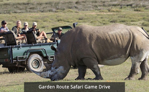 Garden Route Safari Game Drive