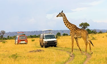 Kenya Tour Review Image