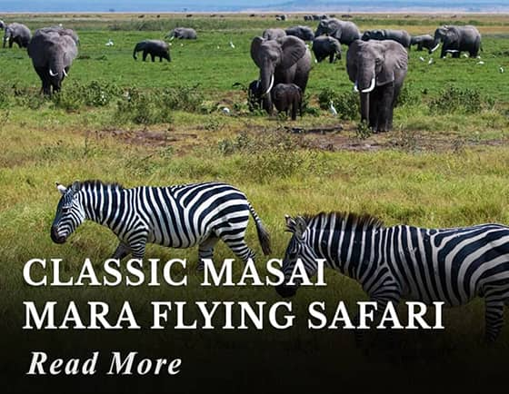 Classic Masai Mara Flying Safari Tour