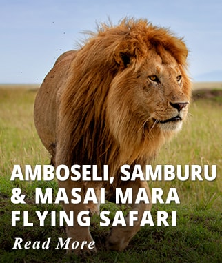 Kenya Flying Safari Tour