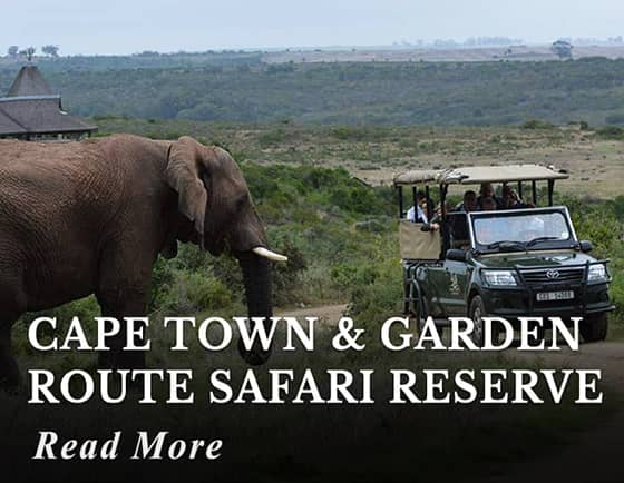 Cape Town & Garden Route Safari Tour